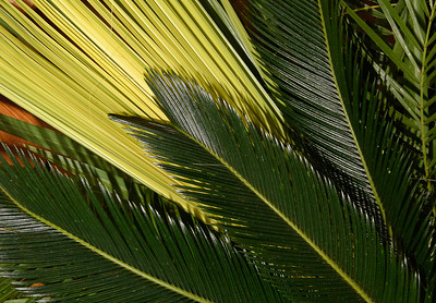 Palm Sunday 2019_1153_300 DPI