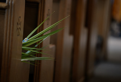 Palm Sunday 2019_6960_300 DPI