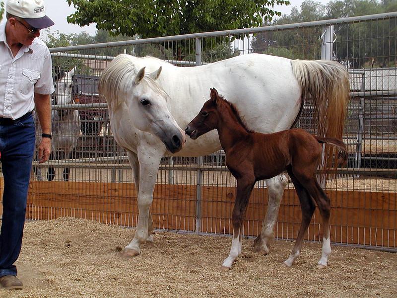 Kinders Steele (Remington Steele x Kinders Anna), as a newborn.