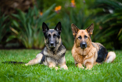 20210502_dogs_025