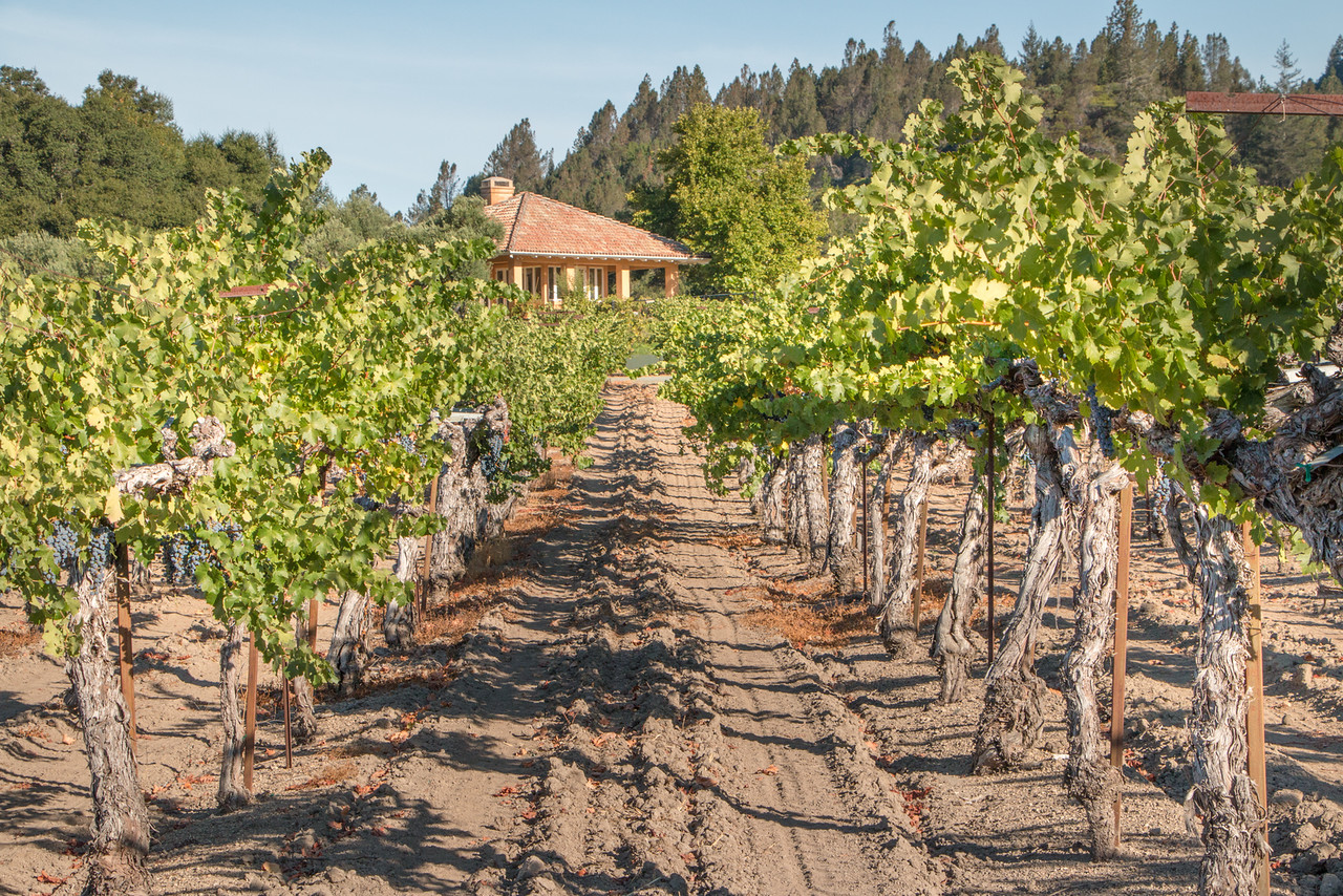 Our Calistoga AirBnB nestled in vineyards