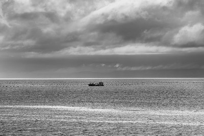 Working the Firth of Thames 5527bw