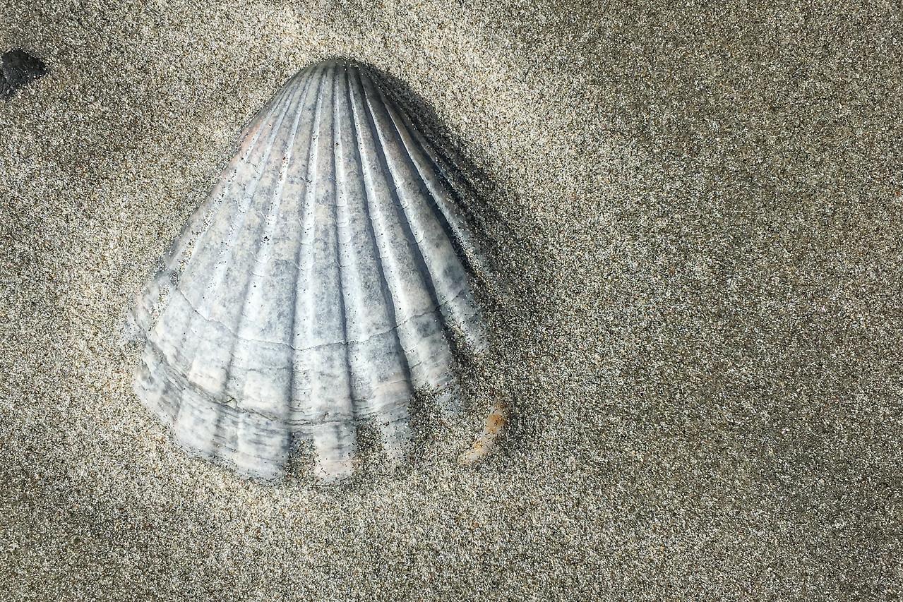 Waihi Beach shell 6219