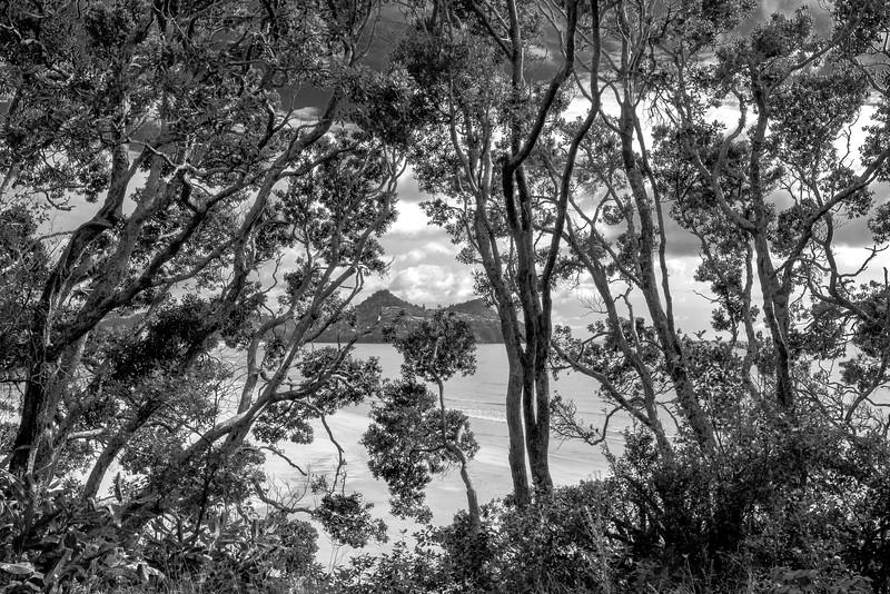 View of Paku through trees 5570bw