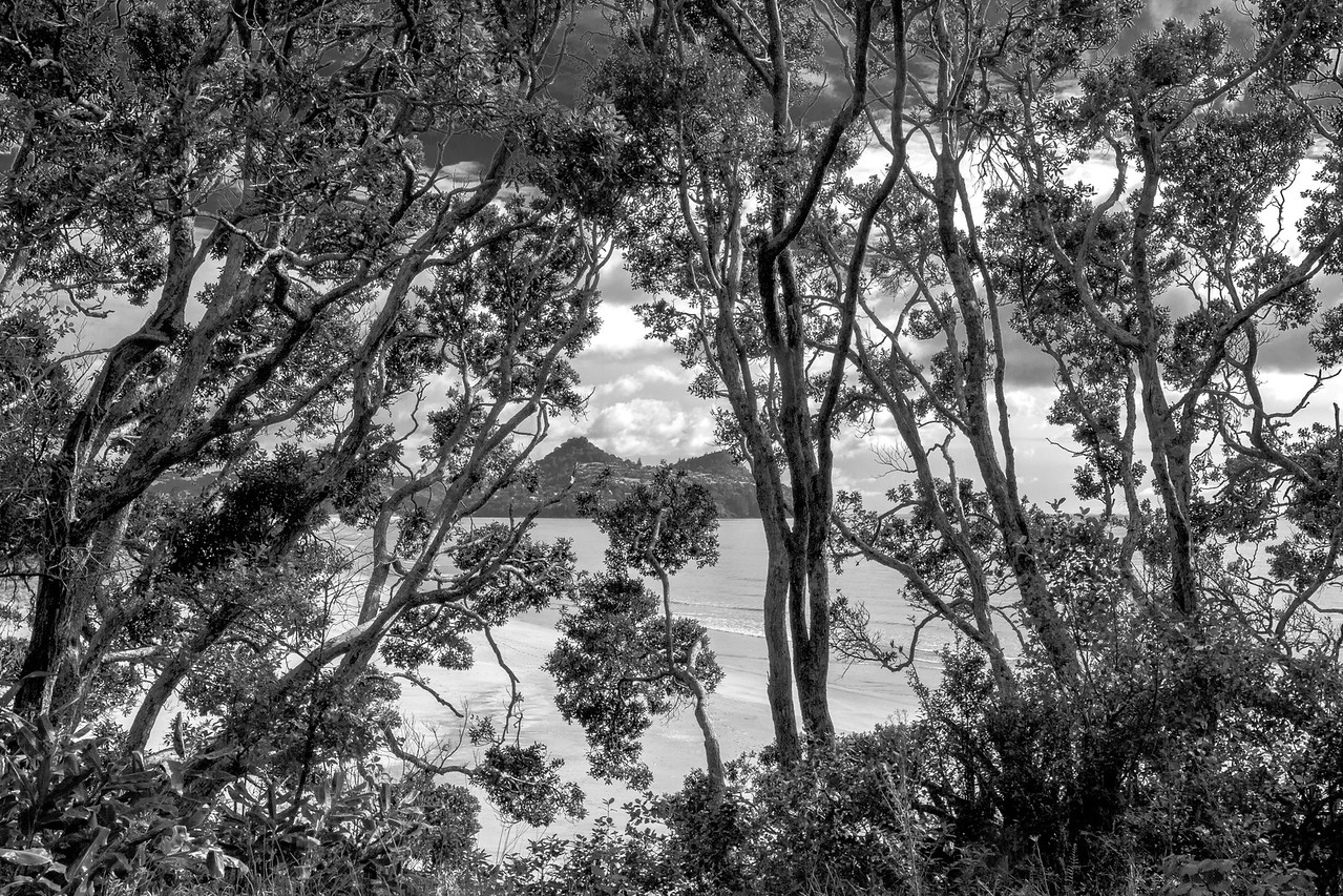 View of Paku through trees 5570bw