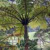 Lush flora 5514