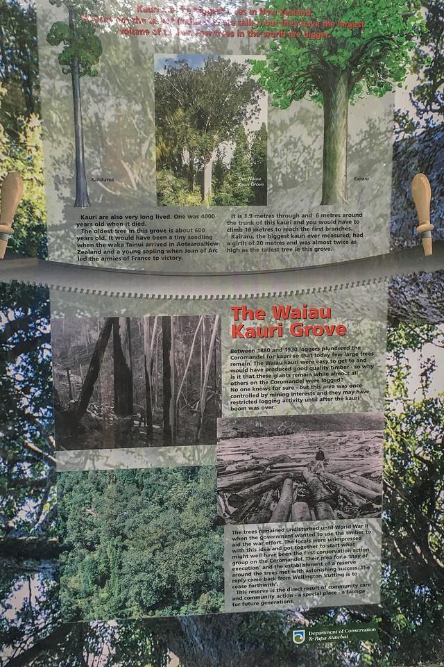 Kauri Grove info 6184