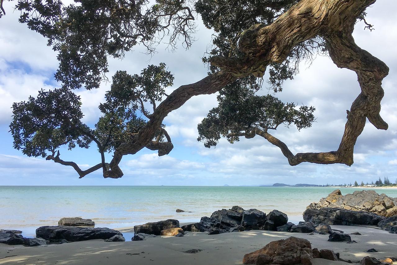 Waihi tree 6245