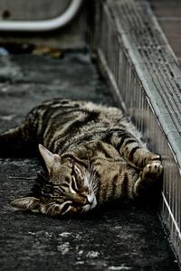 Cat in HK