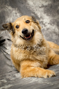 Dinah is a fabulously friendly 8 yr old shepherd mix.  She's too cute for words and has good manners.  Great with people but maybe not so much with other animals.
