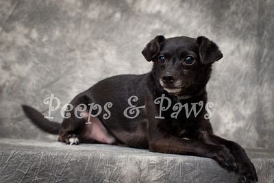 Chance is a 3 yr old Chihuahua and poodle mix.  He's very cute and friendly.  He may be small but he doesn't know it.