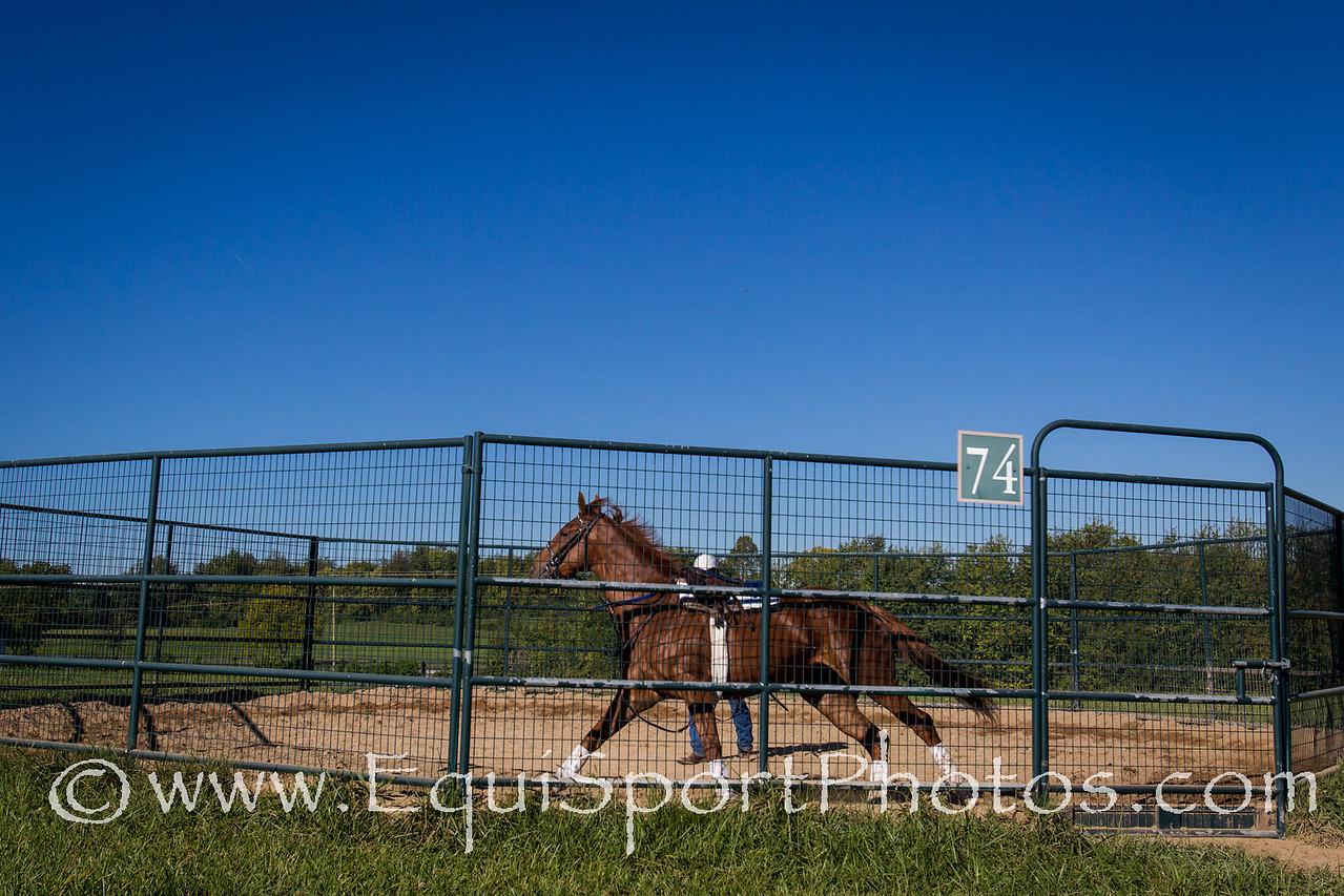 Flak at Keeneland 9.24.2012