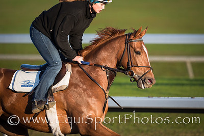 Flak on a gallop at Keeneland on 10.13.2012