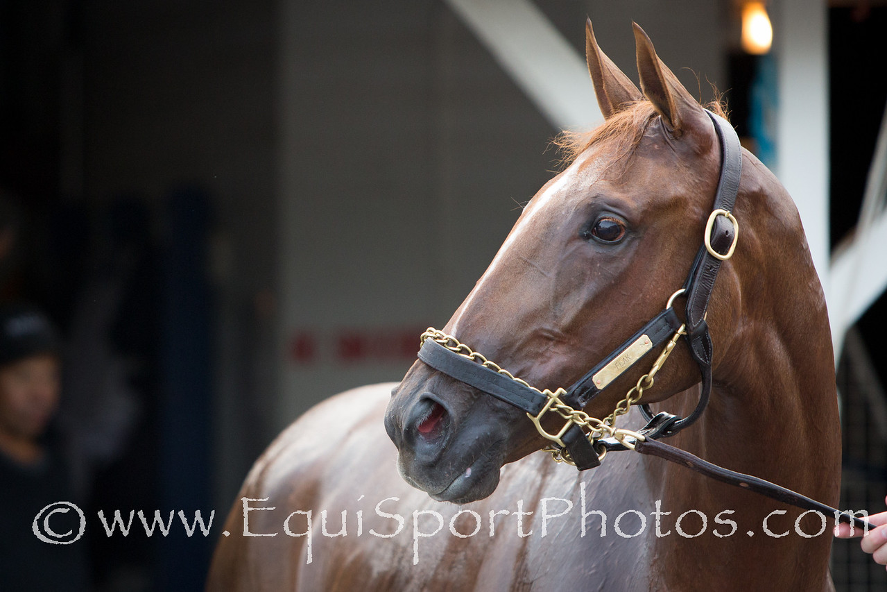 Flak at Churchill Downs on 6.16.2012