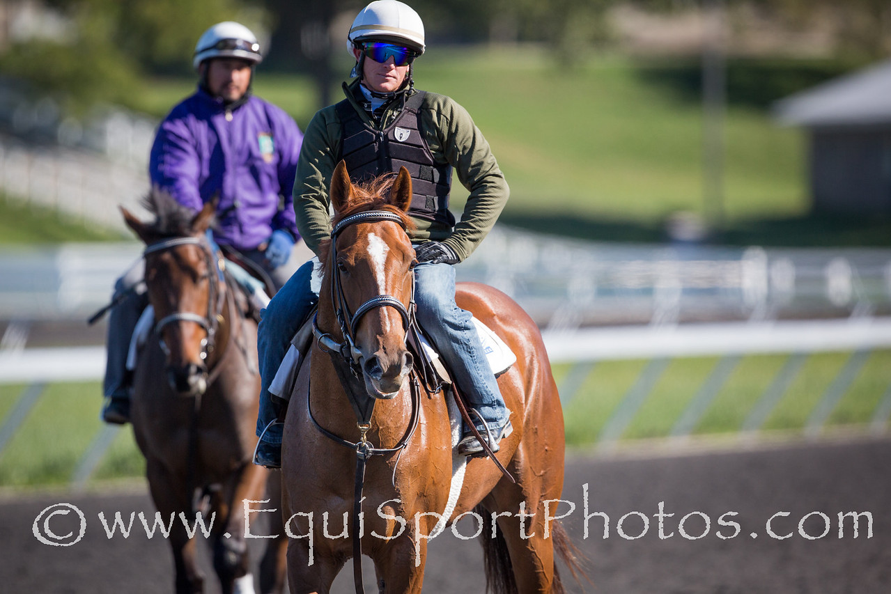 Flak - very green in her training.  Works in the round pen before going to the training track at Keeneland for a gallop.  on 9.24.12