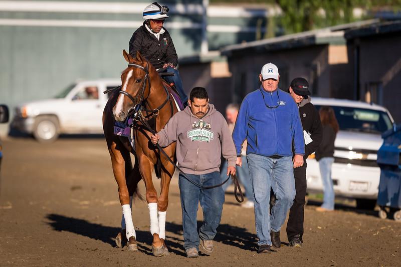 Rosalind goes out for a gallop at Santa Anita 10.31.13.