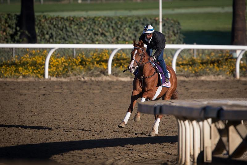 Rosalind gallops at Santa Anita Park on 10.31.2013