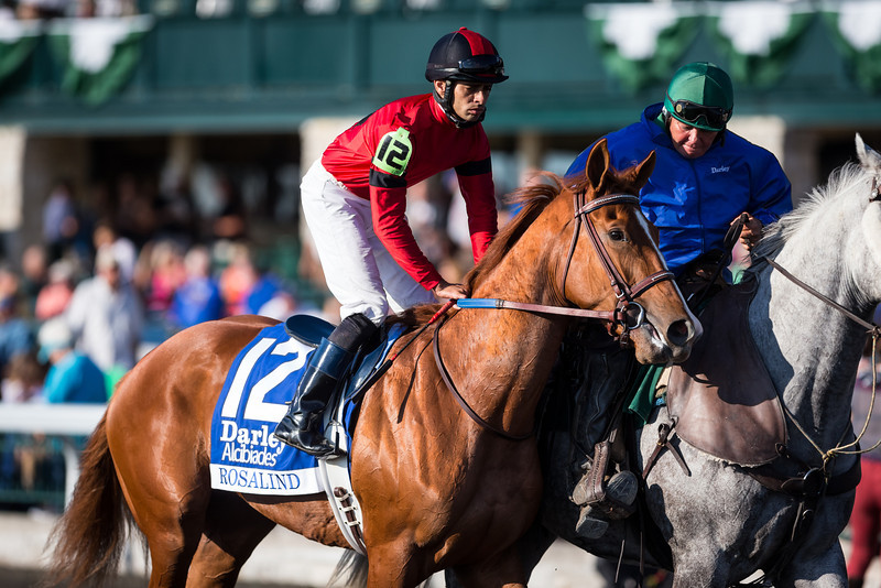 Rosalind in the Alcibiades at Keeneland on 10.04.2013