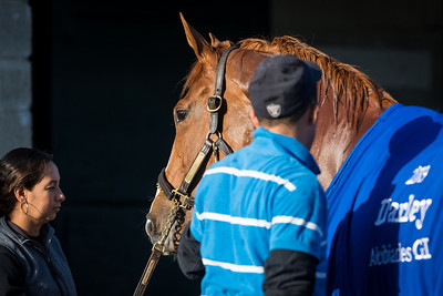 Rosalind, with Rafael Penaup, works at Keeneland 4.01.2014.