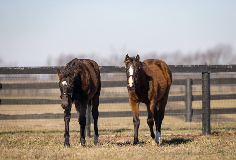 Twirling Candy - Giant's Jewel and Honor Code - Glory Gal '20 at Lantern Hill 1.23.21.