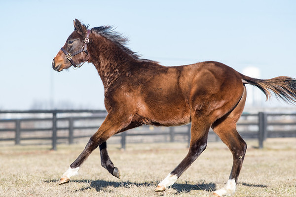 Honor Code - Glory Gal '20 (filly) at Lantern Hill 1.23.21.