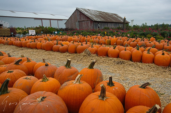 Pumpkin and barn