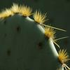 Ever present cactus!