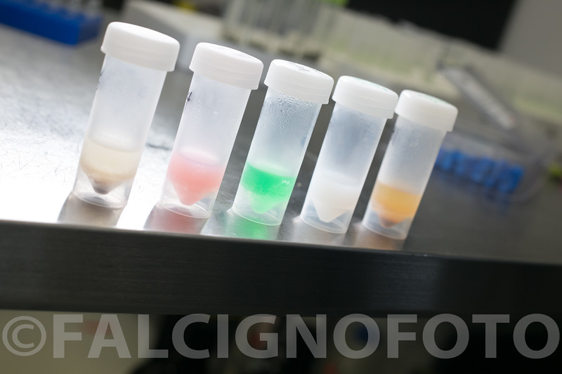 FalcignoFoto-MCR-HiRes-0836