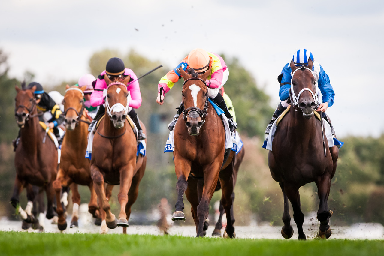 Grand Arch runs second in the Shadwell Turf Mile at Keeneland 10.04.14.