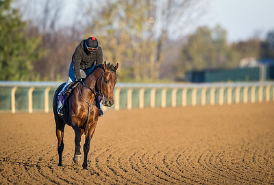 Four Wheel Drive, trained by Wesley A. Ward, exercises in preparation for the Breeders' Cup Turf Sprint at Keeneland 10.31.20