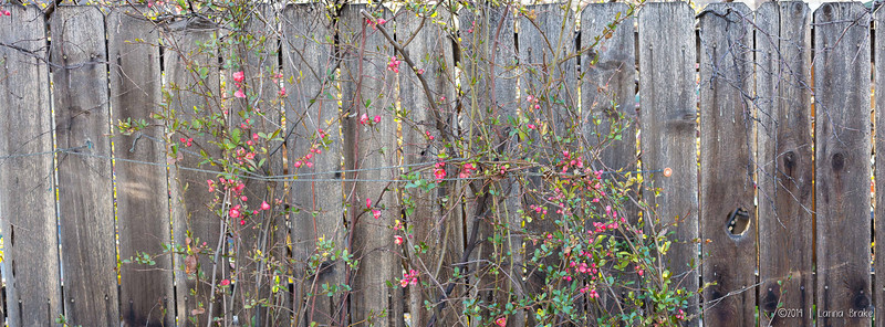20140411 Loveland_Scholl_Spring-19_WEB
