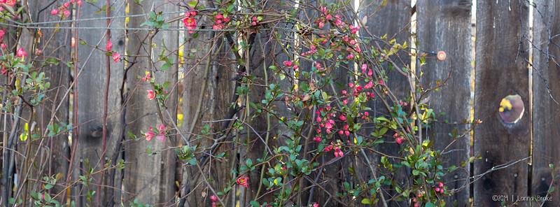 20140411 Loveland_Scholl_Spring-17_WEB