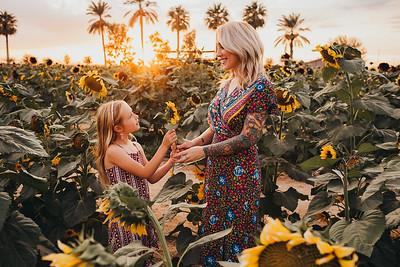 Sunflower- SunshynePIx-6304
