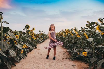Sunflower- SunshynePIx-6454