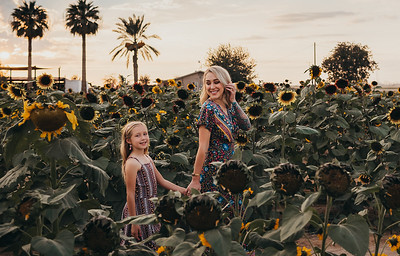 Sunflower- SunshynePIx-6179
