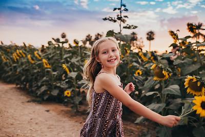 Sunflower- SunshynePIx-6400