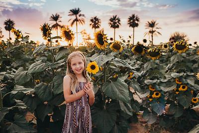 Sunflower- SunshynePIx-6360