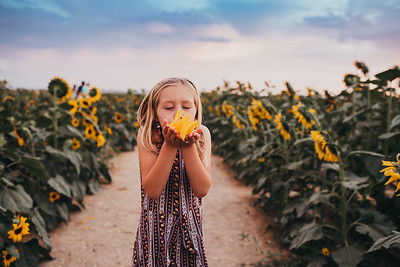 Sunflower- SunshynePIx-6478