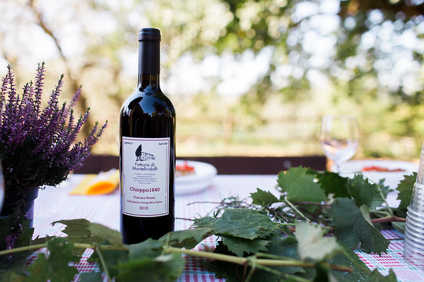 Eatravel || Vineyard Harvest