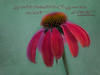 echinacea do a kindness quote