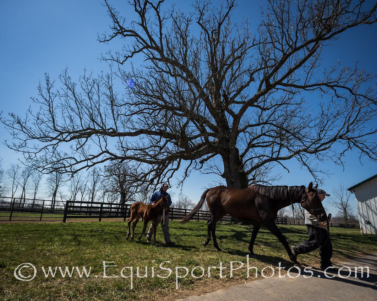Westwood Pride & foal at Mulholland Springs Farm 4.02.2013