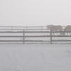 Horses_