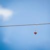 NCRC General NCRC 20120616 - 0001