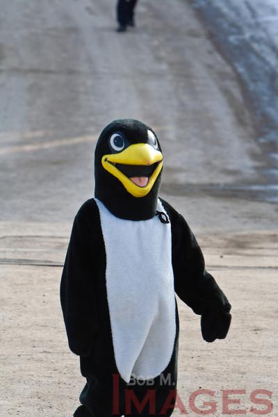 Penguin Plunge 20120211 - 015