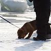 Penguin Plunge 20120211 - 020