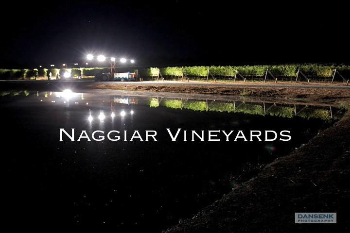 NaggiarHarvest_4