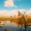 South LA Marsh