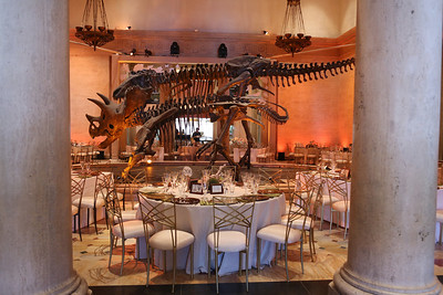 Natural History Museum 100th Anniversary Gala