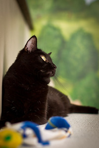 Riley - a 2 yr old black with white flecks female short hair cat.  She's very playful and fun.  She's been at the Lexington Humane Society since 4/11