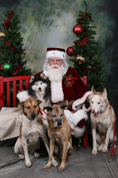 2015 Husky House - Pictures with Santa